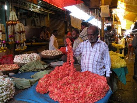 Mysore___Calicut___arriv_e_Cochin_318