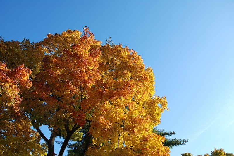 Fall Color and Blue Sky