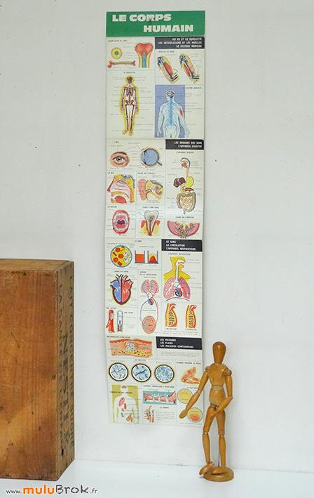 LE-CORPS-HUMAIN-Anatomie-1-muluBrok-Vintage
