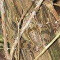 1/ grenouille bois de seine et marne (1 article par jour)