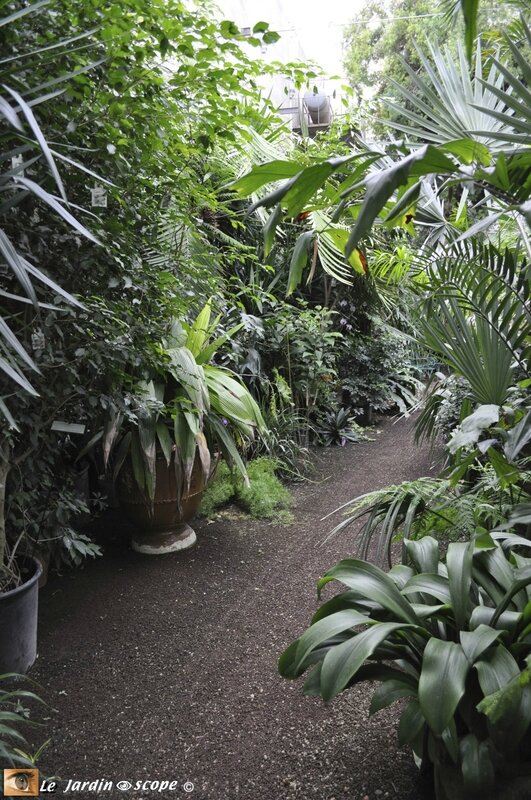 Serre-Jardin-des-plante-3