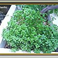 Pesto de basilic - astuce de fainéante