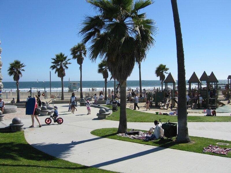 palmier venice-beach-by-cs-helsinki-fi