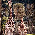 girafes pessac
