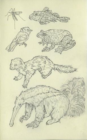 animaux empaillés22