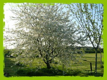 avril_2011_00081