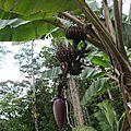 la flore en Guyane
