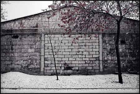 White_wall_Daaram_Jollant