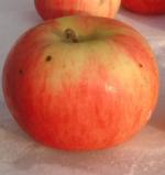 pomme belle fille de salins