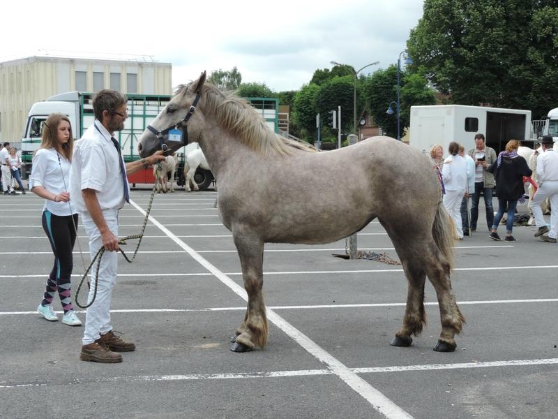 Fleurette Tourville - 18 Juin 2016 - Concours d'élevage local - St Pol sur Ternoise - 3e (1 an)