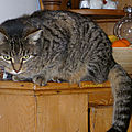21/06/19 : les chats de juin