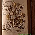 Projet 52 - fleurs séchées