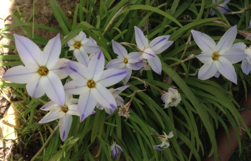 Capture fleurs du printemps
