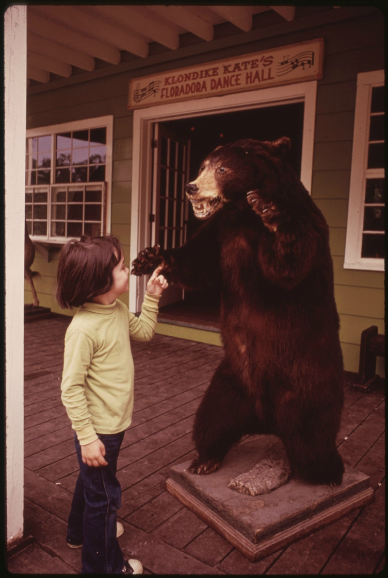 CHILD_POKES_HIS_FINGER_AT_A_STUFFED_BEAR_IN_THE_ENCHANTED_FOREST_AT_OLD_FORGE,_NEW_YORK,_IN_THE_ADIRONDACK_FOREST