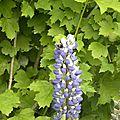 fleurs-de-breche (42)