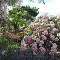 Jardin de Morailles (11)