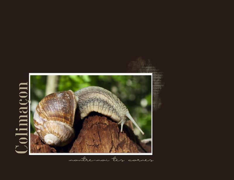 snail_JB_