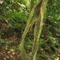 Magnifique tronc d'arbre