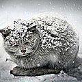 Un chat aussi peut mourir de froid