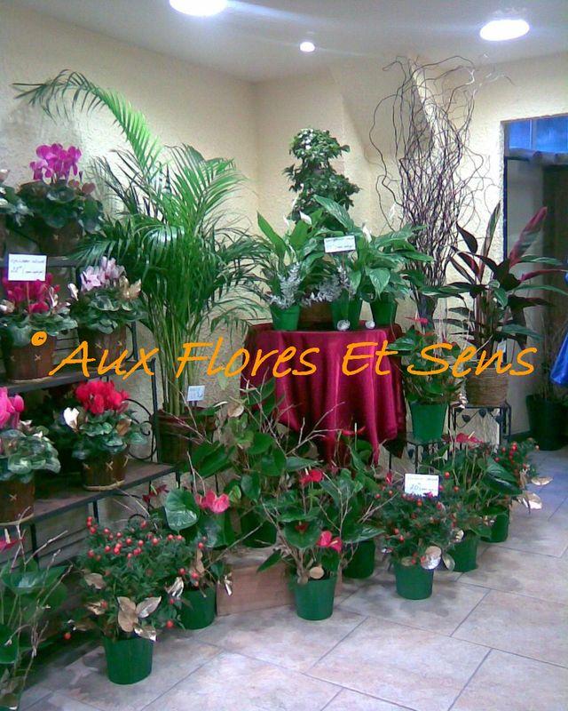 Diverses plantes