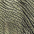 Textures de la nature : un autre regard