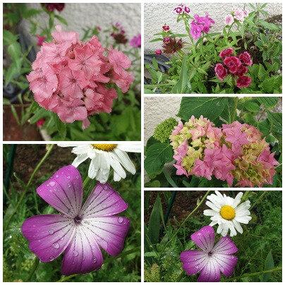 Balades fête des mères brocante jardin (31)