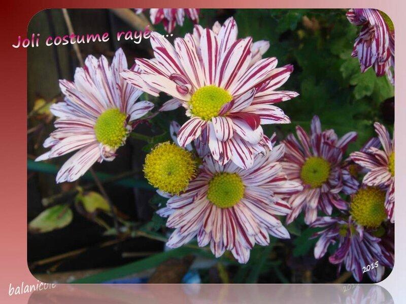 balanicole_2015_9