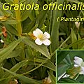 61 Gratiola officinalis
