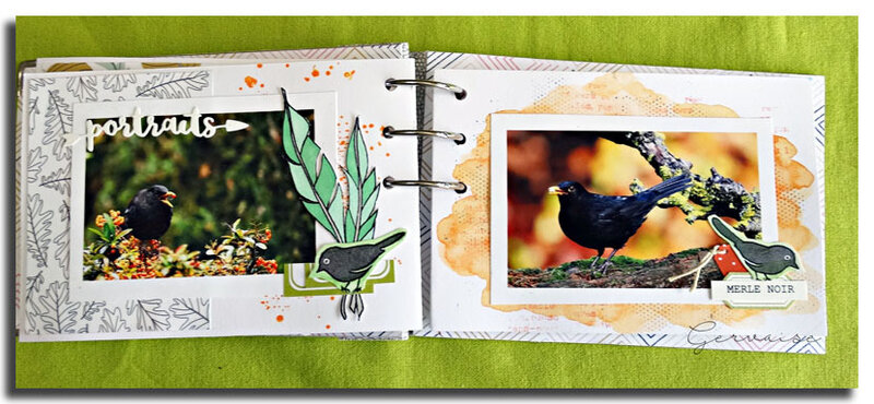 Oiseaux de mon jardin (13)