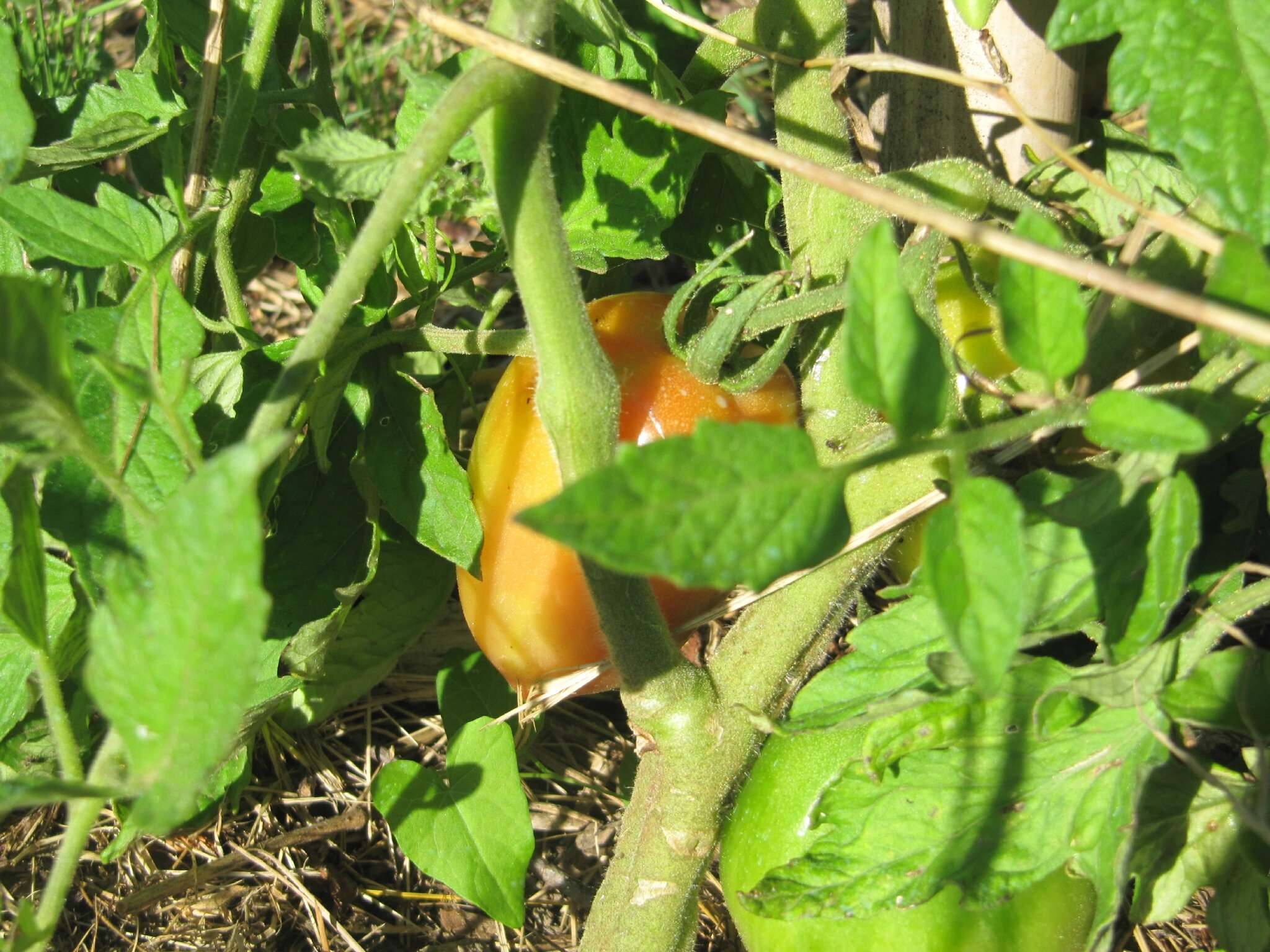 Le blog a déjà un an et le nouveau jardin quatre mois