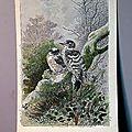Une ancienne récompense scolaire, une très belle gravure d'oiseau la sittelle...