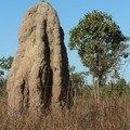 Les termitières géantes du Kakadu