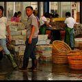 Archipel de Zhou Shan la criée tri du poisson