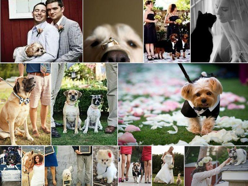 mode conseils vos animaux de compagnie votre mariage rose fantaisie wedding planner. Black Bedroom Furniture Sets. Home Design Ideas