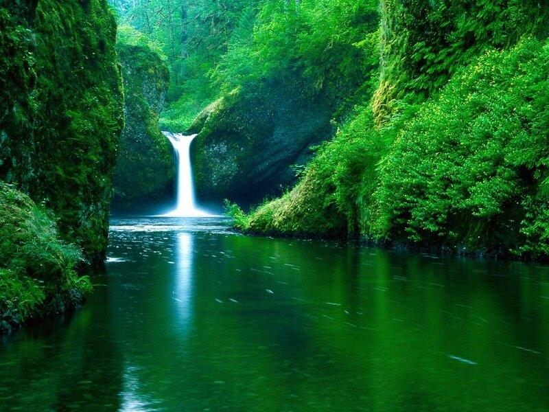 4646-cascade-luxuriante-WallFizz