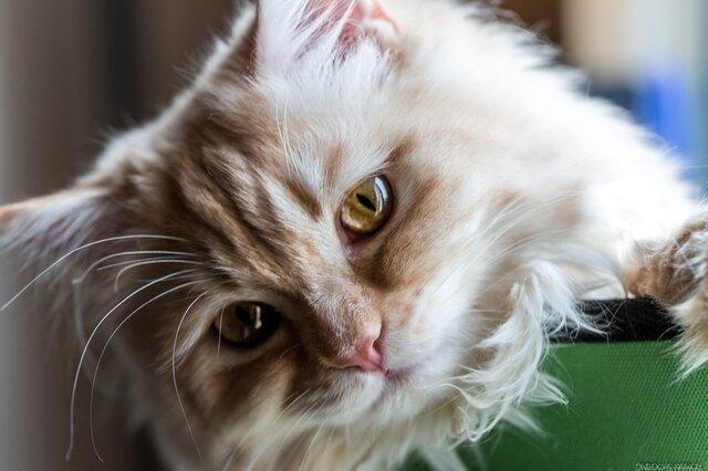 Néko le chat (3)