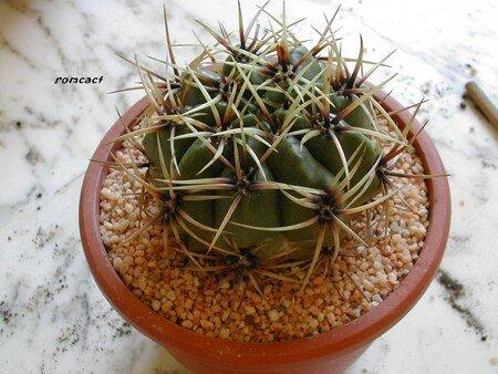 rempotage_d_une_plante_enracin___10_
