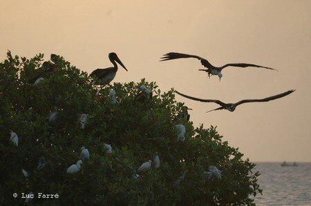 pelican02