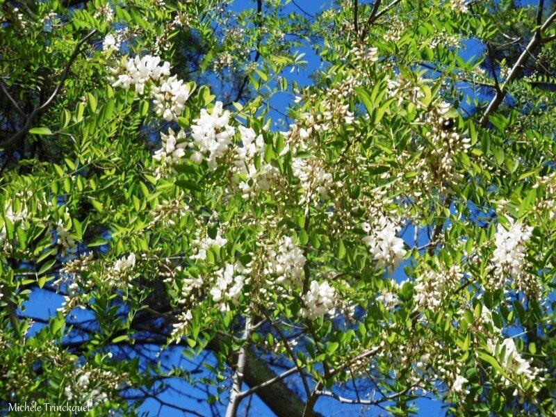 1-Fleurs de Léon 200417