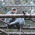 2010-11-18 parc Cuc Phuong (7)