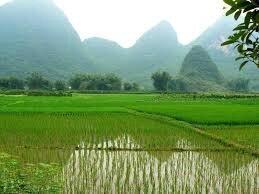 paysage yangshao