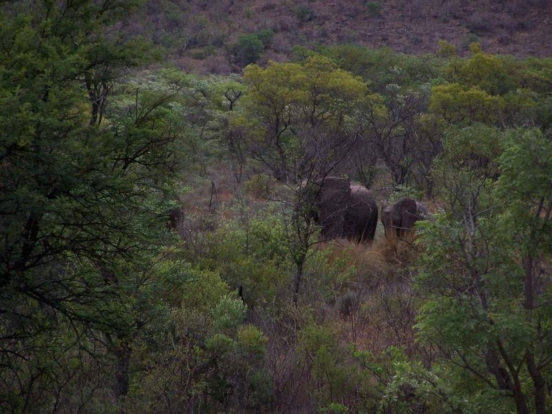 Elephant et son petit