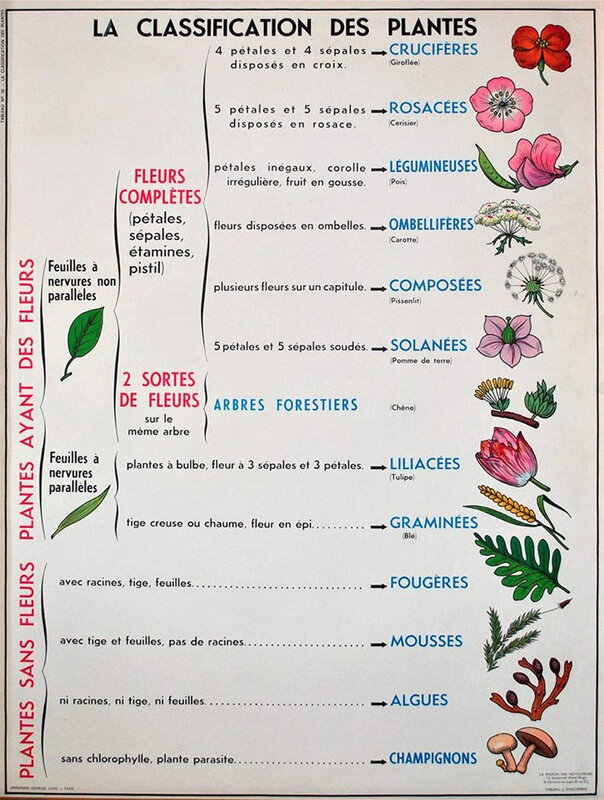 Classification des plantes