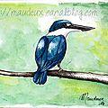 Un bel oiseaux bleu !