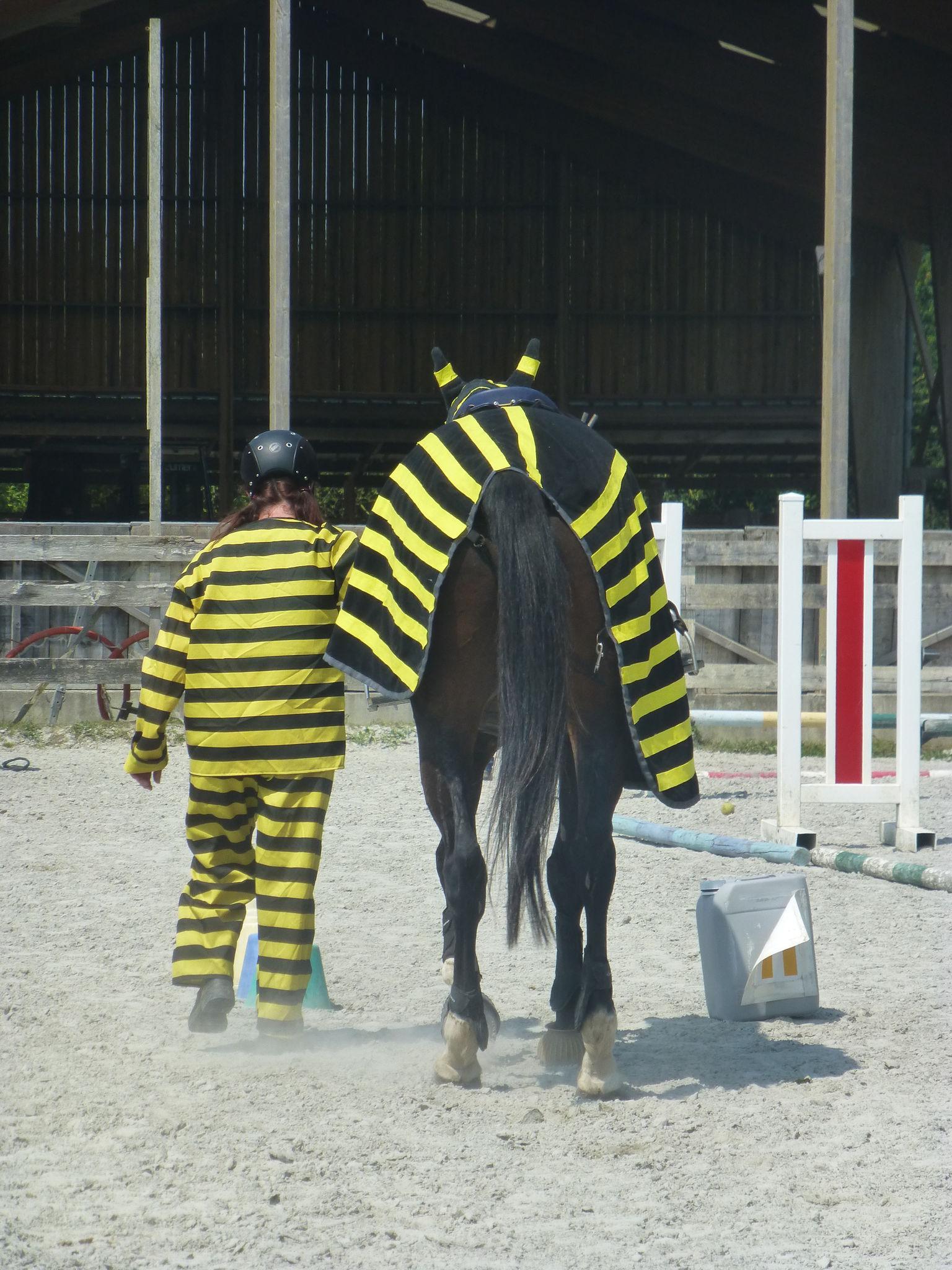Jeux équestres manchots 2013 (215)