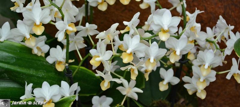 Orchidée-279