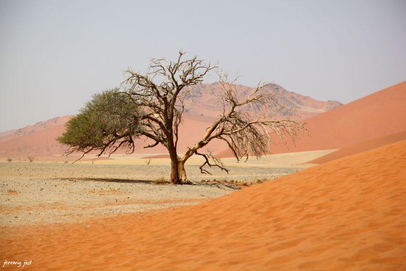 dune 45 contraste