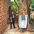 Lokotin(iroco ou iroko) : arbre sacré et ancestral du bénin