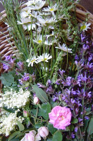fleurs 002