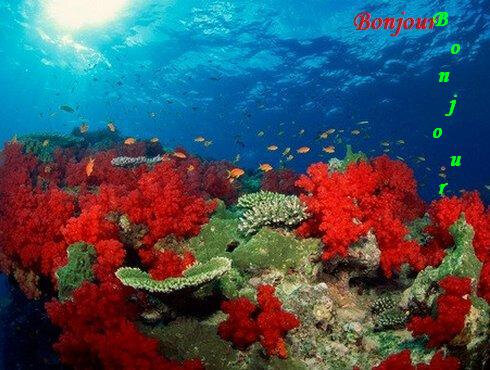 b j corail rouge Paint BPat20